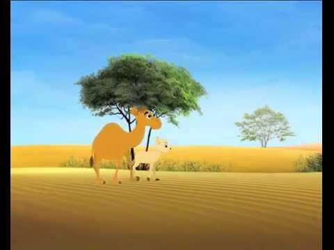 الصحراء تنبض بالحياة